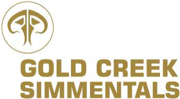 Gold Creek Simmentals